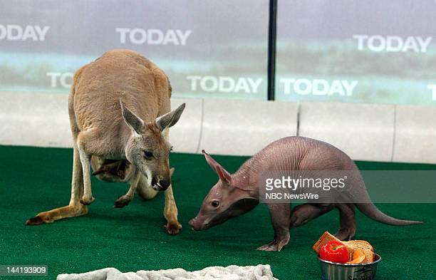 A kangaroo and an aardvark appear on NBC News' 'Today' show