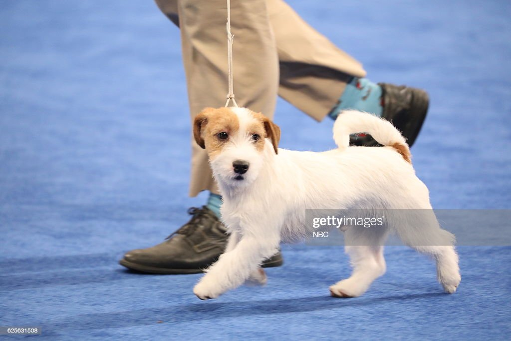 National Dog Show 2016 Pekingese