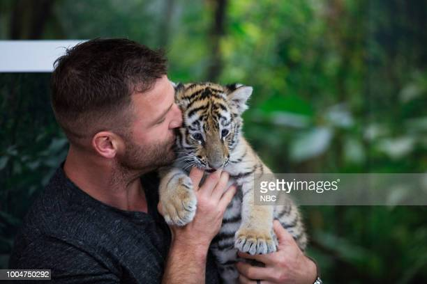 Baby Tiger Olive on Monday July 23 2018