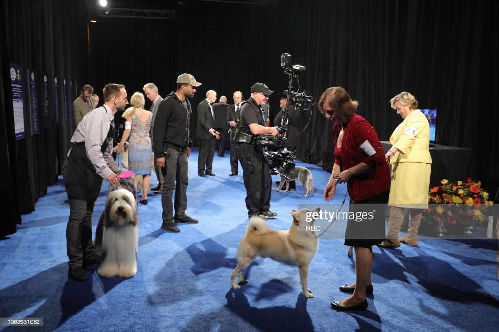 Purina National Dog Show 2020.Backstage At The National Dog Show News Photo Getty Images