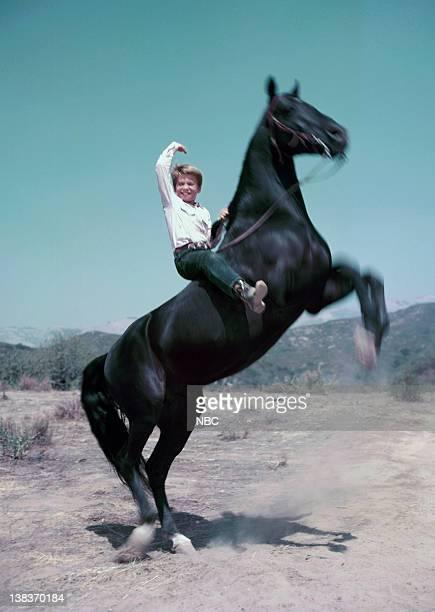 Bobby Diamond as Joey Newton Highland Dale as Fury