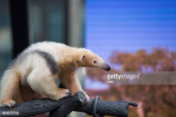 Corbin Maxey's Wild Animals on Friday, July 28, 2017 --