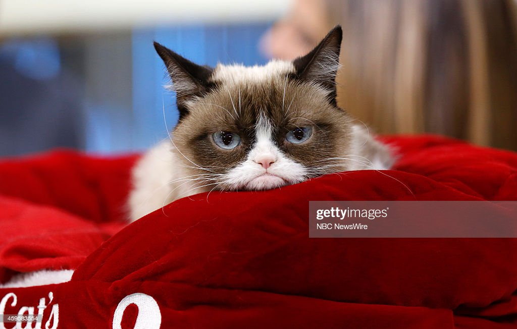 Grumpy Cat appears on NBC News' 'Today' show --