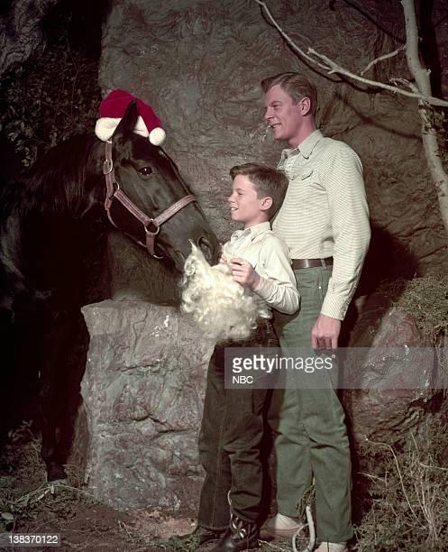 Highland Dale as Fury Bobby Diamond as Joey Newton William Fawcett as Pete Wilkey
