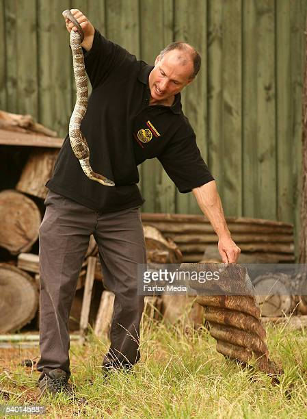 Pictured is snake catcher Raymond Hoser retrieving a Tiger Snake from a backyard in Park Orchards Monday 29th of January 2007 THE AGE Photo by PAT...