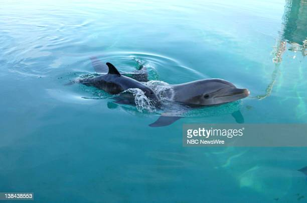 Katrina Baby Dolphins Two of the dolphins washed out to sea from their aquarium in Gulfport Mississippi during hurricane Katrina had babiesThey are 7...