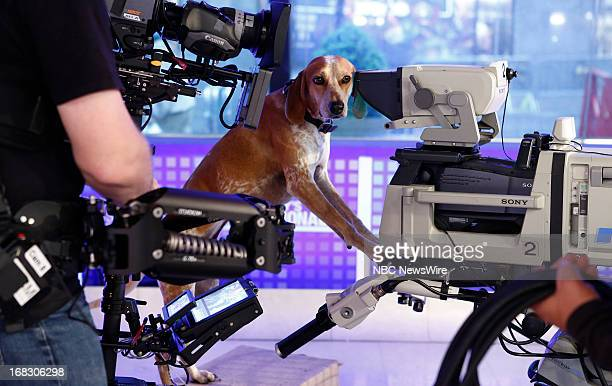 Maddie the dog appears on NBC News' Today show