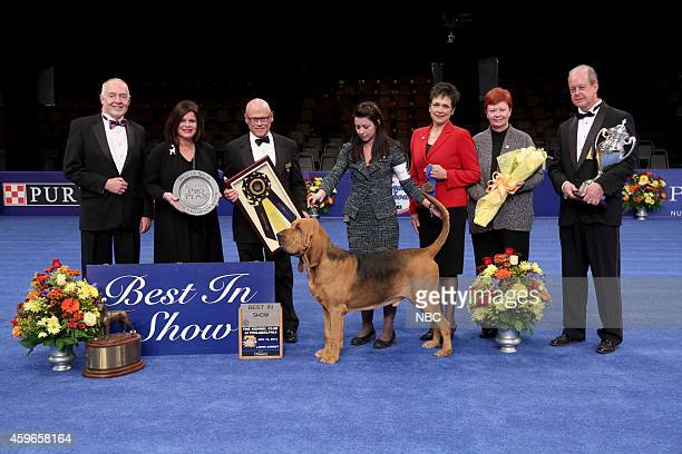 Nathan 4 yearold male Bloodhound winner of the 2014 National Dog Show Presented by Purina and his owner Heather Helmer
