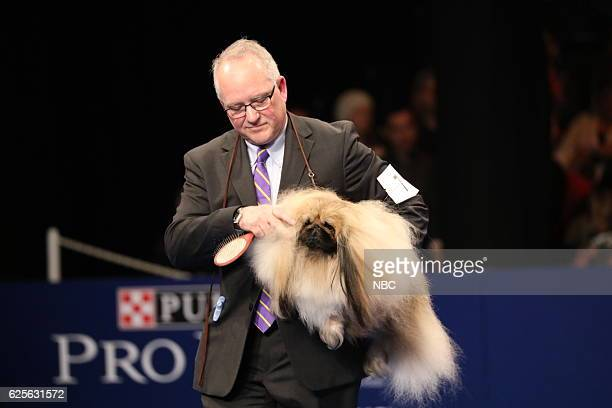 Pekingese named 'Chuck' competes at The National Dog Show Presented by Purina