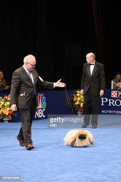 Pekingese named 'Chuck' competes at The National Dog Show Presented by Purina Toy Group Winner