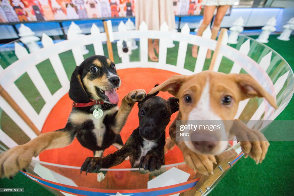Puppies on Wednesday, August 16, 2017 --