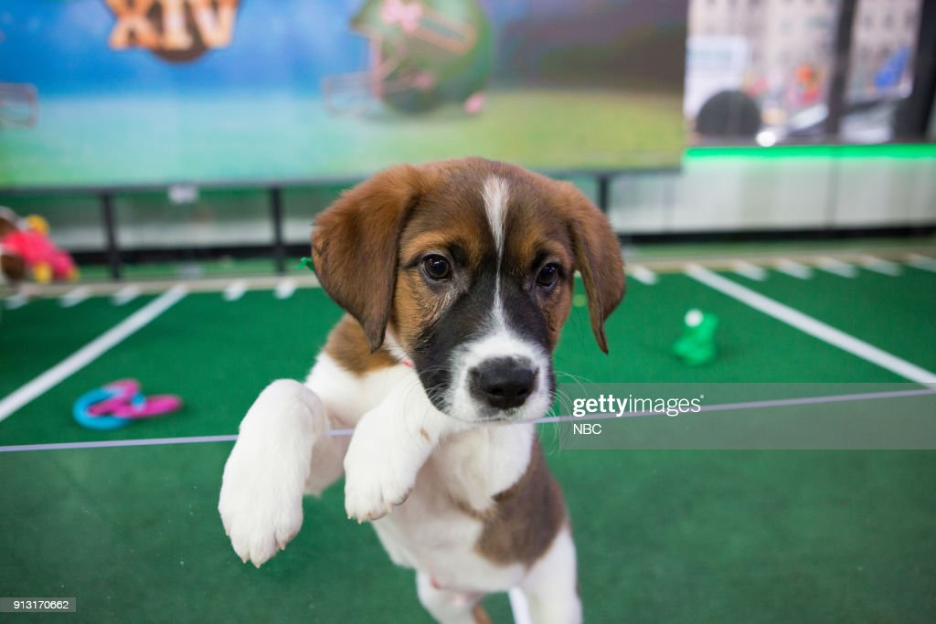 Dogpile! It's Puppy Bowl Time!