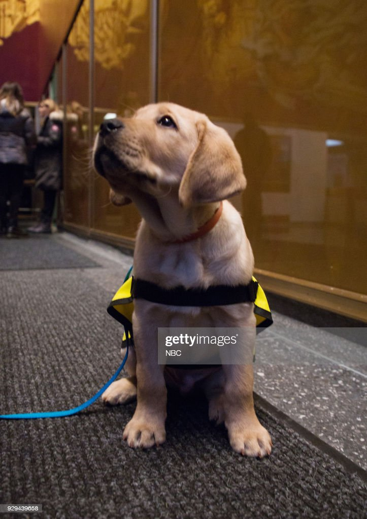 Sunny the Today Show Puppy on Thursday, Mar. 8, 2018 --