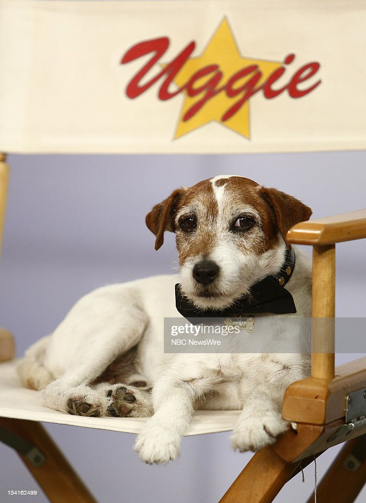 UNS: In Focus: Uggie - Star Of The Artist - Dies At 13