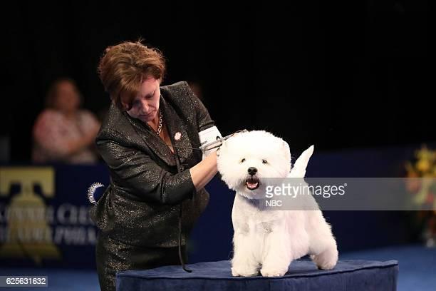 West Highland White Terrier named Rondo Terrier Group Winner