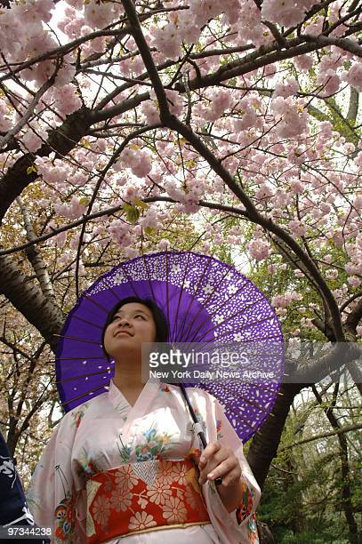 Pictures at the 26th annual Cherry Blossom Festival at the Brooklyn Botanic Garden Vinnie Cheng looks at the blossoms of a cherry tree in the Cherry...