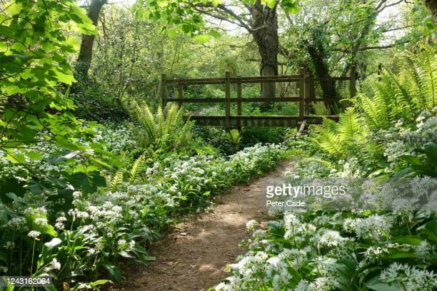 picturesque bridge in woodland - footpath stock pictures, royalty-free photos & images