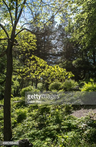 Picturesque Innisfree Garden In Millbrook Ny Stock Photo | Getty Images