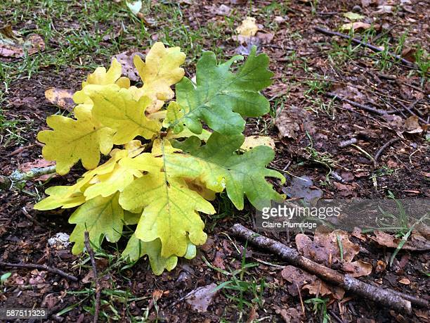 picturing autumn - claire plumridge stock pictures, royalty-free photos & images