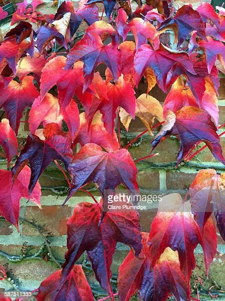 picturing autumn - ウェスト・バークシャー ストックフォトと画像