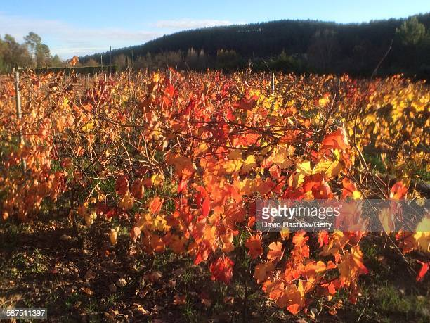 picturing autumn - lorgues stock photos and pictures