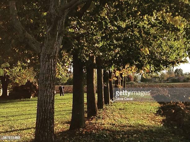 picturing autumn - silvia casali bildbanksfoton och bilder