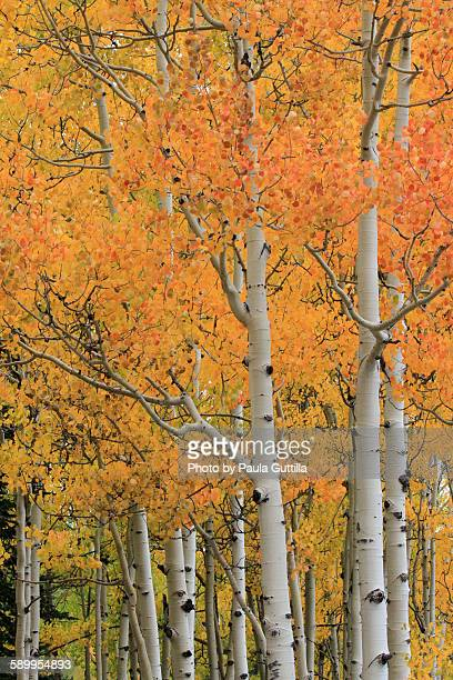 picturing autumn - paula guttilla stock pictures, royalty-free photos & images
