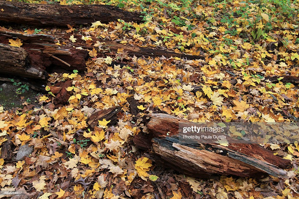 Picturing Autumn : Stock Photo