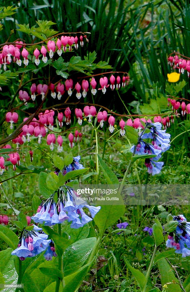 Picturing Spring : Stock Photo