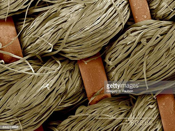 piece of antique crinolin, horsehair and linen sem - scanning electron microscope stock pictures, royalty-free photos & images