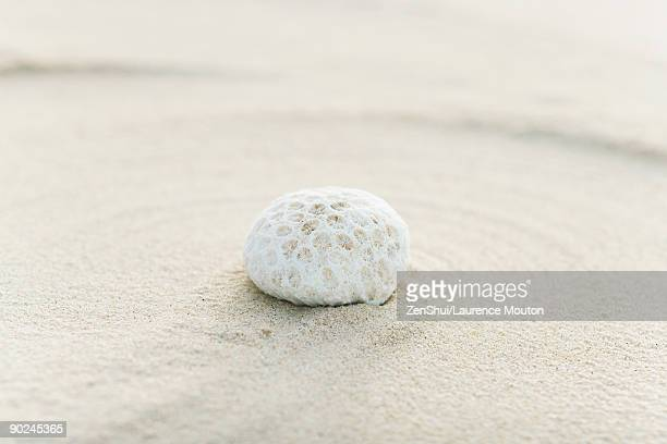 Piece of coral on sand, still life
