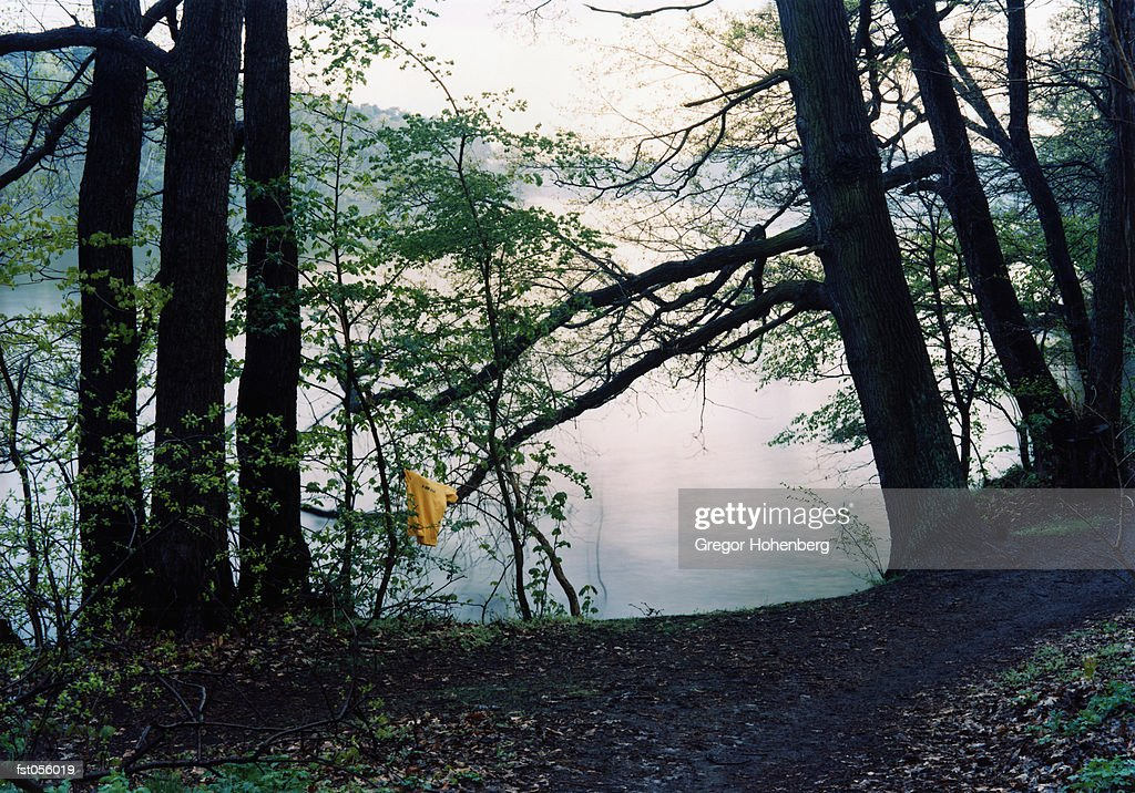 A piece of fabric hanging from a tree by a lake : Stock Photo