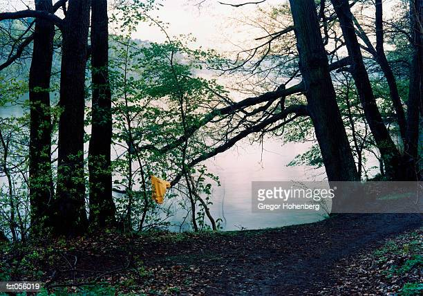 a piece of fabric hanging from a tree by a lake - skinny dipping stock photos and pictures