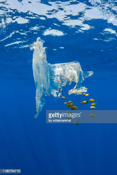 piece of plastic floating in the open ocean which has been opportunistically colonized by some nudibranchs and molluscks as well as providing shelter to a school of tropical fish which are feeding on algae attached to it, indian ocean, sri lanka. - plastic stock pictures, royalty-free photos & images