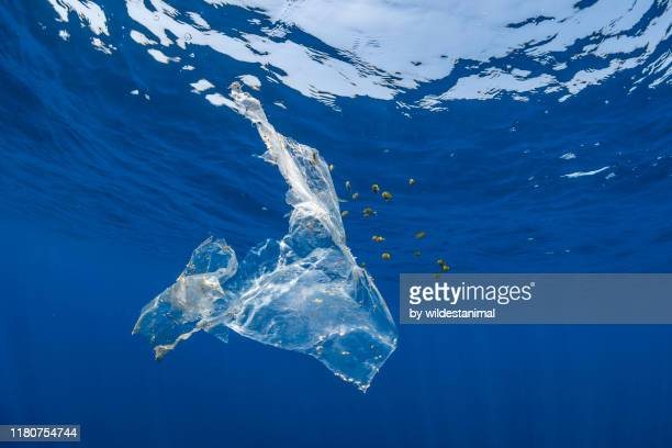 piece of plastic floating in the open ocean which has been opportunistically colonized by some nudibranchs and molluscks as well as providing shelter to a school of tropical fish which are feeding on algae attached to it, indian ocean, sri lanka. - environmental damage stock pictures, royalty-free photos & images