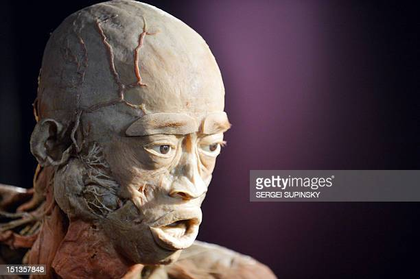 A piece of the popular scienceart exhibitions 'The Human Body' is pictured during it presentation for media in Kiev on September 6 2012 The...
