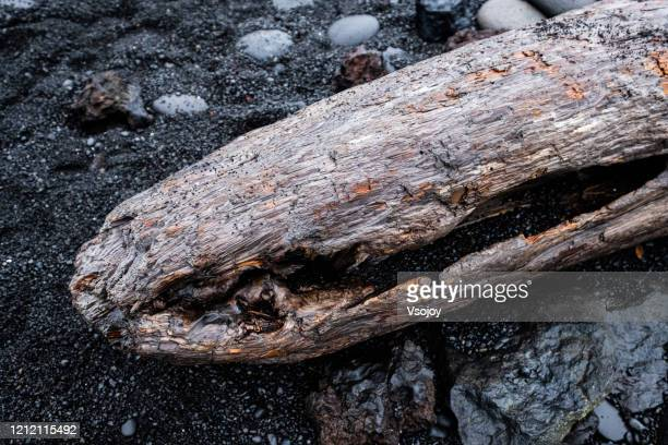a piece of wood at dritvik djúpalónssandur, snæfellsjökull, iceland - vsojoy stock pictures, royalty-free photos & images