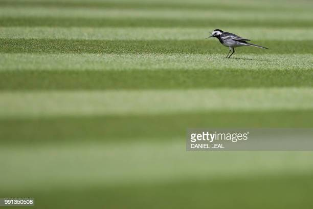 A Pied Wagtail walks across centre court before US player Venus Williams plays Romania's Alexandra Dulgheru during their women's singles second round...