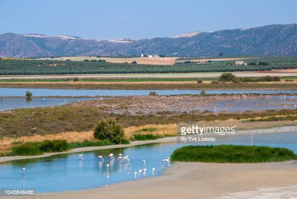 Piedra Lagoon & Flamingos