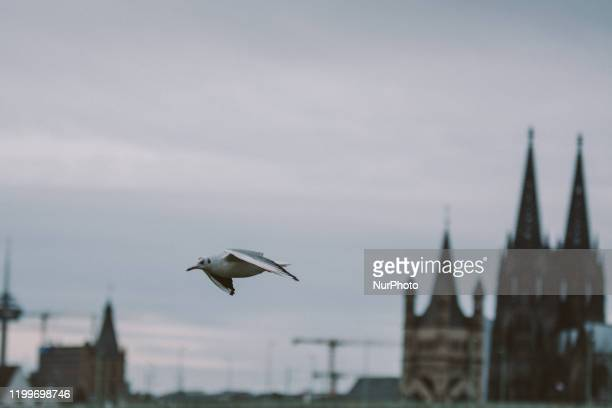 A piegeon flies over Dom catheral upon the Storm Sabine arrival on February 9 2020 in Cologne Germany