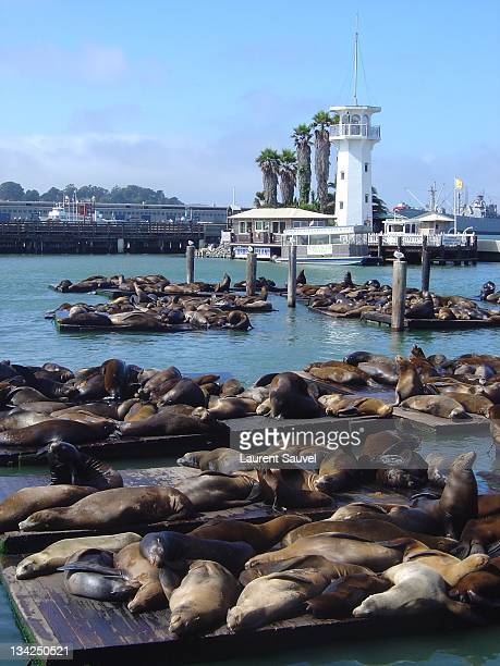 pier 39, san francisco, california - fishermans wharf stock pictures, royalty-free photos & images