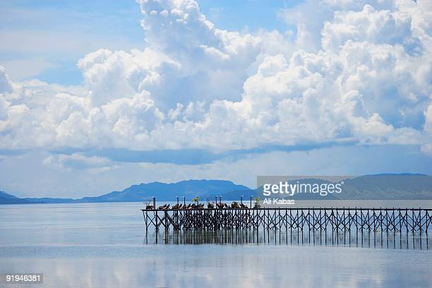 pier in kapalai, malaysia - ali kabas stock pictures, royalty-free photos & images