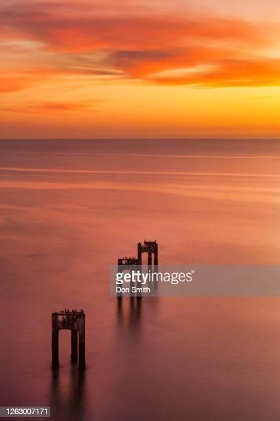 pier pilings, davenport, california - don smith stockfoto's en -beelden