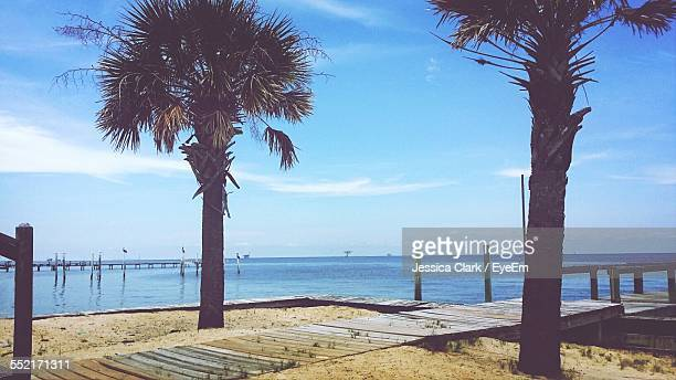 pier with palm trees - gulf shores alabama stock pictures, royalty-free photos & images
