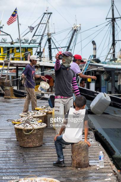 pier workers helping trawlers to unload fresh catch. - caroline pang stock pictures, royalty-free photos & images