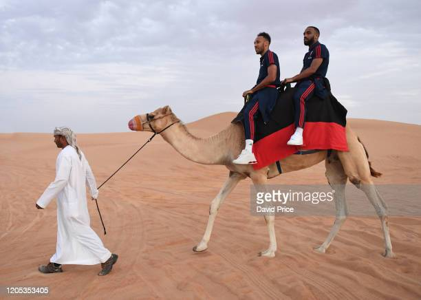 PierreEmerick Aubameyang and Alexandre Lacazette of Arsenal ride on a camel during an Arabian Adventures Desert Safari with Emirates on February 10...
