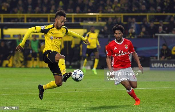 PierreEmerick Aubameyang of Borussia Dortmund in action against Eliseu of Benfica during the UEFA Champions League round of 16 soccer match between...