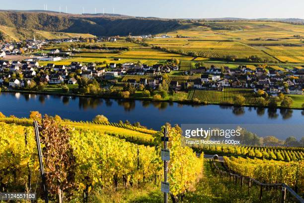piesport colors - moselle stock pictures, royalty-free photos & images