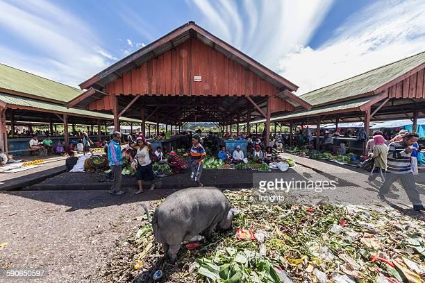 Pig at the market Wamena Papua Indonesia