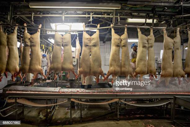 Pig carcasses hang from an overhead conveyor at a Smithfield